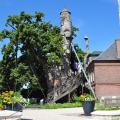 Quelle est la caractéristique du Chêne d'Allouville ?